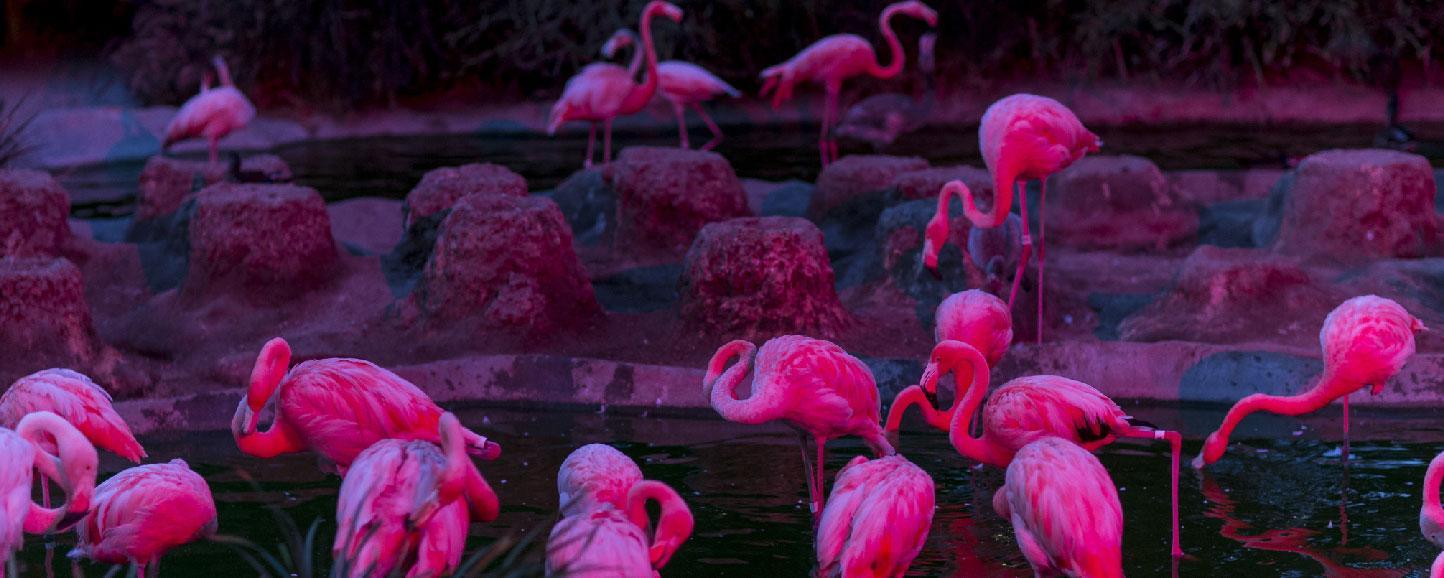 flamingos in the dark